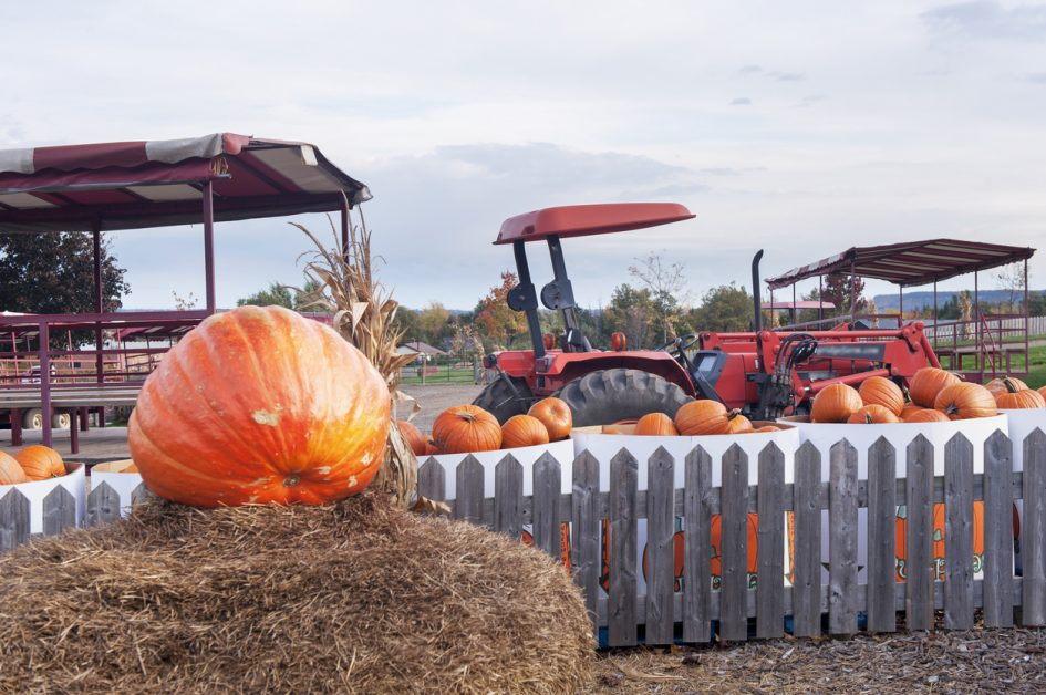 the best halloween festivals for kids on long island